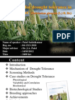 Pearl Millet Drought Tolerent by Rk Mishra