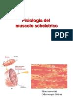 muscolo schel_parte1