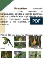 Familias Aves Silvestres 1