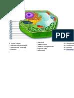celula vegetala.doc