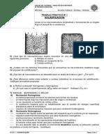 TPN1_ SOLIDIFICACION_2010