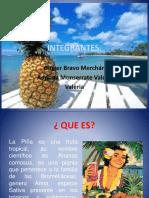 diapositivas de la piña.pptx