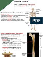 2. Skeletal system.ppt