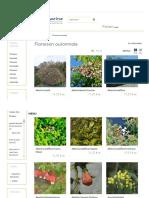 Plantes à Floraison Automnale - Hortimarine
