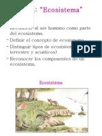 Eco Sistema 1