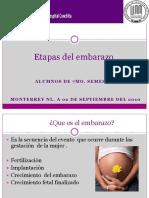 Etapas Del Embarazo2