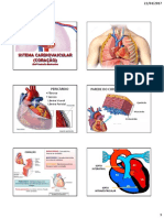 8 Cardiovascular