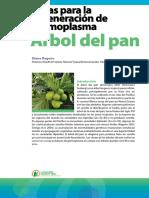 Árbol de Pan
