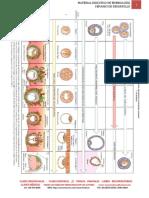 embrio1 (2)