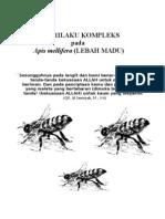 Lebah Madu (Apis mellifera)Doc