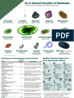 Worm Parasite Atlas