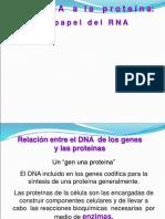 10 Sintesis de Proteinas