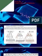 Clase de Clonacion y de Pcr -Biologia Molecular 2016