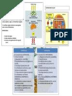 Metabolismo Celular Anual