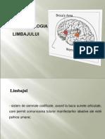 neuropsihologia limbajului