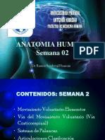 Anatomia Semana 2