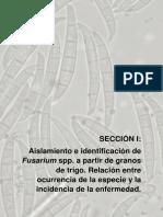 I - Aislamiento e Identificación de Fusarium Spp. a Partir de Granos de Trigo