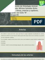 Arterias-Venas-y-Capilares.pptx