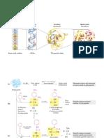Clase Proteinas