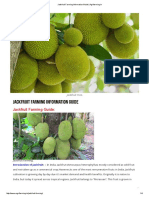 Jackfruit Farming Information Guide _ Agrifarming