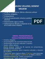 Mildius, Mildiu Velloso, Downy Mildeu