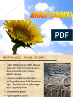 Materi Akar.pptx
