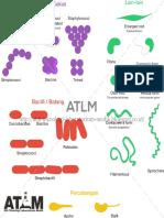 Mengenal Morfologi Bentuk Sel, Koloni dan Flagella Pada Bakteri