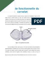 Anatomie Fonctionnelle Du Tronc Cerebrak