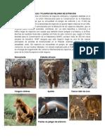 ANIMALES Y PLANTAS EN PELIGRO DE EXTINCIÓN.docx