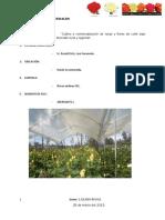 275517841-Proyecto-Rosas-1.pdf