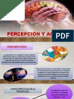 Percepción y Agnosias Final 1