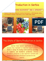 Berry Production in Serbia