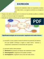 Fisiologia Animalexcrecionweb 1212510098288807 8