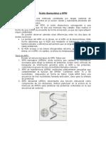 Cido Ribonucleico o ARN