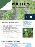 copy of strawberry presentation