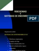 Sistema de Endomembranas Principal