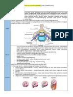 Hernia Nukleus Pulposus (Hnp)(1)