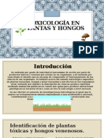 Toxicología en Plantas y Hongos