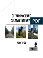 OLIVO_ES
