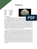 Fungia sp.docx