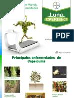 7. Luna Innovación - Bayer