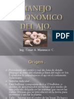 Manejo Agronómico Del Ajo