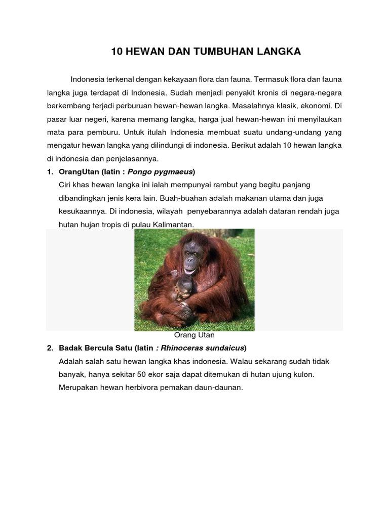 6500 Koleksi Gambar 10 Hewan Dan Tumbuhan Langka Di Indonesia Terbaik