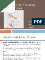 unidadmotoraysinapsisneuromuscular-121107192149-phpapp02
