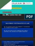 Matriz Extracelular(1)