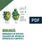 Inmunocromatografia de Hepatitis C