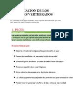 CLASIFICACION DE LOS ANIMALES VERTEBRADOS.docx