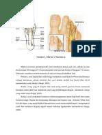 Anatomi Morton Neuroma
