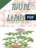 clasedepapasnov-2010-101124144138-phpapp01