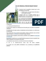 EL ACEITE DE COCO UN FABULOSO Y POTENTE REGALO TROPICAL.docx